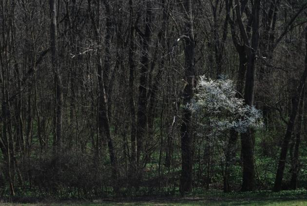 spring ramps 9 web